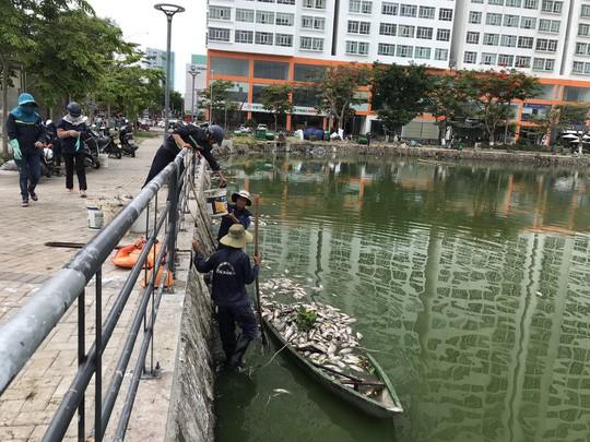 Đà Nẵng: Hơn 5 tấn cá chết trắng tại 2 hồ Thạc Gián và Vĩnh Trung - Ảnh 2.