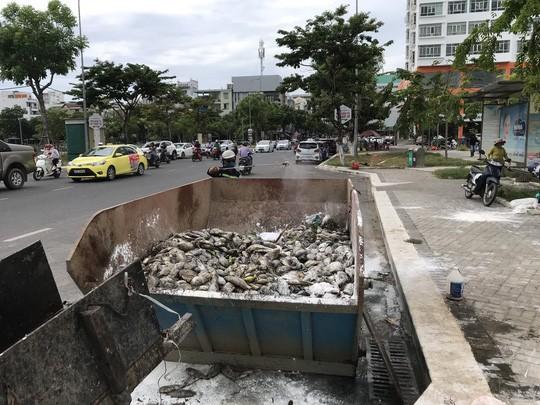 Đà Nẵng: Hơn 5 tấn cá chết trắng tại 2 hồ Thạc Gián và Vĩnh Trung - Ảnh 3.