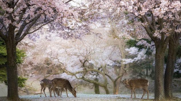 Là điểm đến du lịch hàng đầu châu Á, Osaka Nhật Bản hứa hẹn những điều thú vị mà du khách lần đầu đặt chân đến không nên bỏ qua - Ảnh 7.