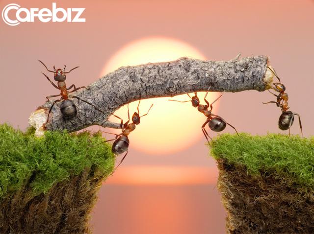 Đàn kiến cần mẫn tha mồi về tổ đợi mùa đông đến, còn con người chây ì kiếm tiền chỉ biết hưởng thụ: An nhàn trước mắt, tương lai muộn phiền! - Ảnh 1.