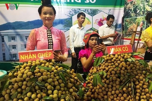 Dự kiến xuất khẩu 8.100 tấn nhãn Sơn La năm 2019 - Ảnh 1.