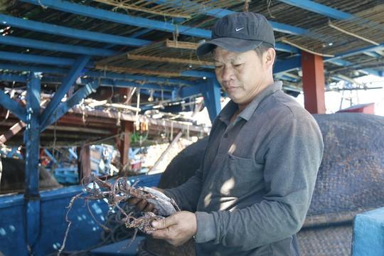 Giá lên, 1.000 tấn mực khô ở Quảng Nam thoát cảnh ứ đọng - Ảnh 1.