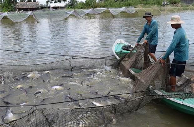 Xây dựng thương hiệu cá tra Việt Nam: Khó nhưng phải làm - Ảnh 1.