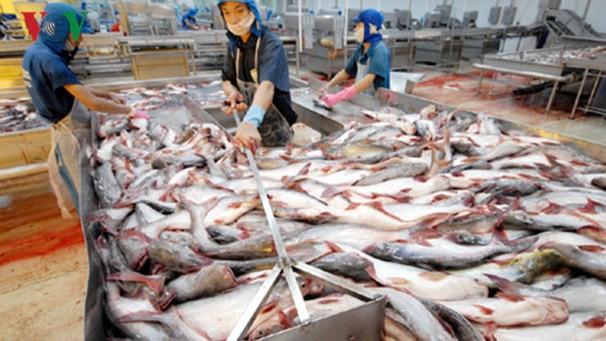 Giá cá tra thương phẩm và cá giống giảm mức thấp nhất trong 10 năm qua - Ảnh 1.