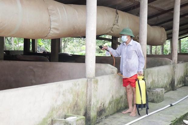 Bến Tre gặp khó trong việc xử lý lợn mắc bệnh dịch tả châu Phi - Ảnh 1.