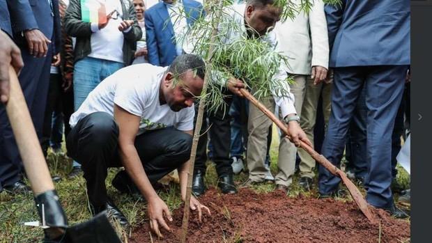 Trồng 350 TRIỆU cây xanh trong MỘT ngày, quốc gia này chính thức phá kỷ lục trồng cây trên mọi thời đại - Ảnh 1.