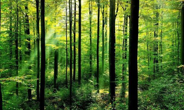 Trồng 350 TRIỆU cây xanh trong MỘT ngày, quốc gia này chính thức phá kỷ lục trồng cây trên mọi thời đại - Ảnh 3.
