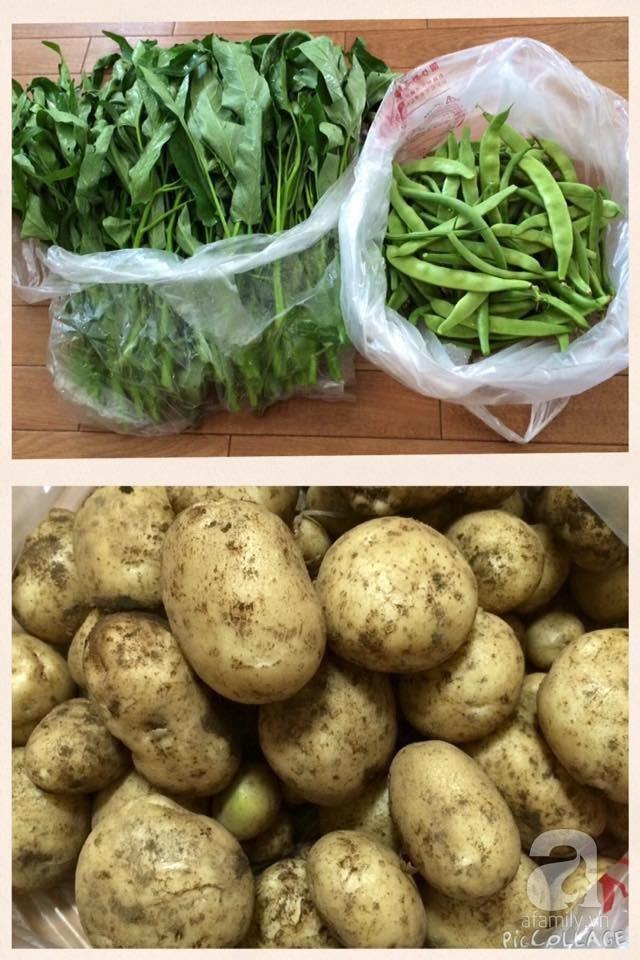 Gia đình Việt ở Nhật: Ông bố kỹ sư dành thời gian thuê đất, phủ kín bằng rau quả sạch cho vợ con thỏa nỗi nhớ quê hương  - Ảnh 15.