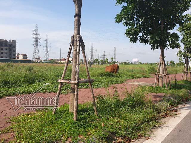 Miếng đất đầy cỏ dại 'chôn' tiền tỷ ở khu đô thị TNR Stars Đồng Văn - Ảnh 6.