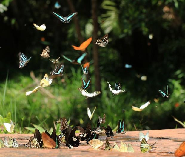 Ơn giời, cẩm nang du lịch Thái Lan theo mọi mùa trong năm đây rồi: Tháng nào đi nơi nấy, khỏi lo mất vui! - Ảnh 17.