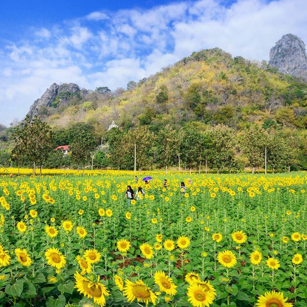 Ơn giời, cẩm nang du lịch Thái Lan theo mọi mùa trong năm đây rồi: Tháng nào đi nơi nấy, khỏi lo mất vui! - Ảnh 19.