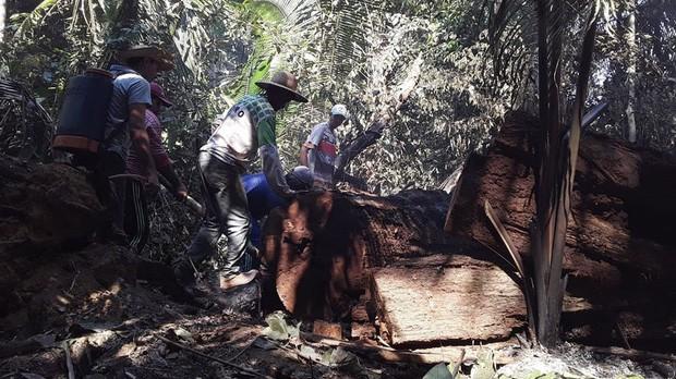 Thảm cảnh của thổ dân trước vụ cháy rừng Amazon tàn khốc nhất lịch sử: Chúng tôi đã khóc khi dập lửa, nhiều gia đình mất hết tất cả - Ảnh 4.