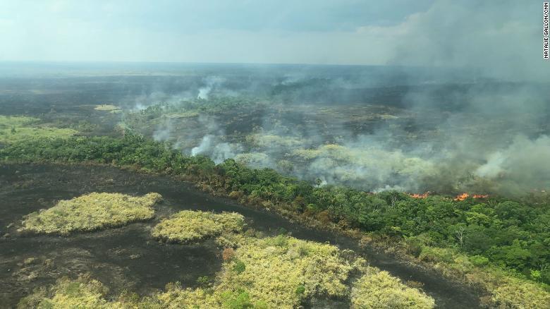 Thảm họa cháy rừng Amazon: Tất cả những gì bạn có thể nhìn