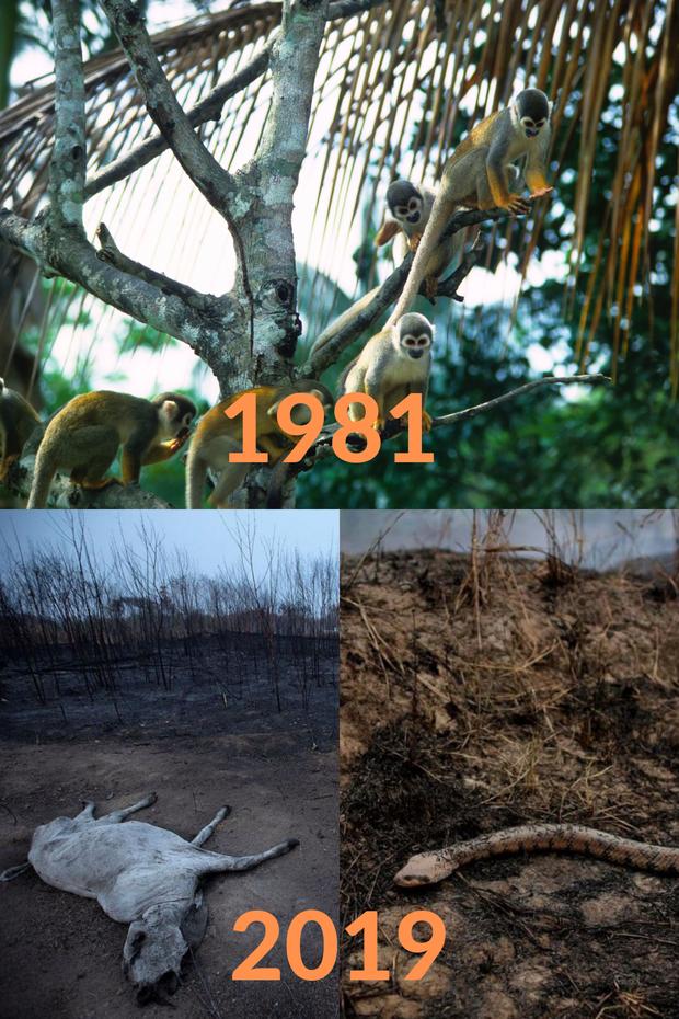 Loạt ảnh Amazon trước và sau đại nạn cháy rừng 2019: Lá phổi xanh ngày nào đã mang đầy bệnh tật do con người đầu độc - Ảnh 1.