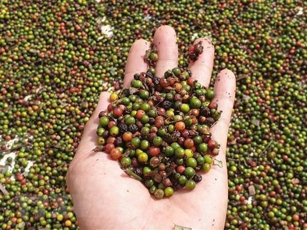 Ước tính xuất siêu của nông, lâm và thủy sản đạt hơn 6 tỷ USD - Ảnh 1.