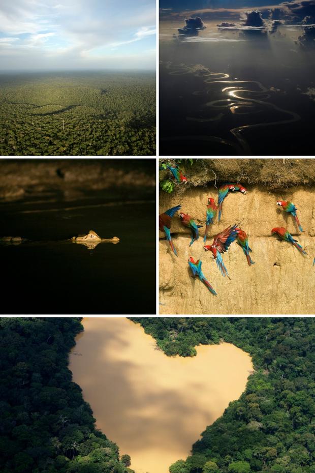 Loạt ảnh Amazon trước và sau đại nạn cháy rừng 2019: Lá phổi xanh ngày nào đã mang đầy bệnh tật do con người đầu độc - Ảnh 13.