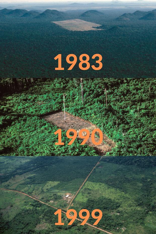 Loạt ảnh Amazon trước và sau đại nạn cháy rừng 2019: Lá phổi xanh ngày nào đã mang đầy bệnh tật do con người đầu độc - Ảnh 7.