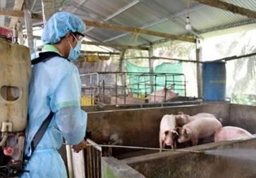 Ngăn chặn bán tháo lợn dịch tả ra thị trường - Ảnh 1.