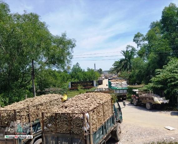 Thừa Thiên - Huế: Xe giăng kín cổng nhà máy chờ nhập sắn - Ảnh 1.