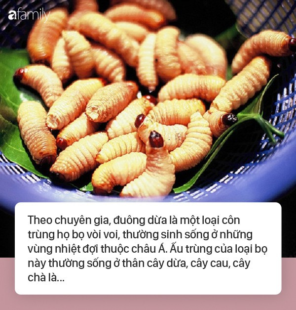 Sốc phản vệ khi ăn đuông dừa, nhộng tằm: Ai cũng cần biết những điều này để bảo vệ sức khỏe, tính mạng - Ảnh 1.