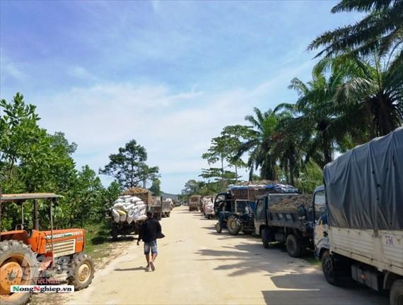 Thừa Thiên - Huế: Xe giăng kín cổng nhà máy chờ nhập sắn - Ảnh 2.