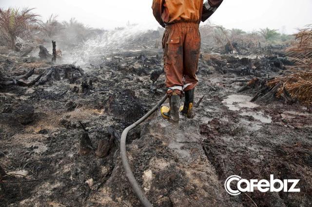 Cơn khát dầu cọ: Cội nguồn của việc cháy rừng hàng loạt tại Indonesia, khiến toàn Đông Nam Á ngập chìm trong ô nhiễm không khí - Ảnh 1.