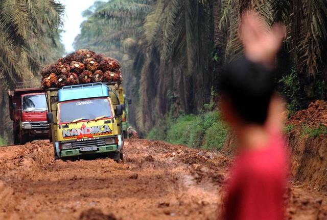 Cơn khát dầu cọ: Cội nguồn của việc cháy rừng hàng loạt tại Indonesia, khiến toàn Đông Nam Á ngập chìm trong ô nhiễm không khí - Ảnh 2.