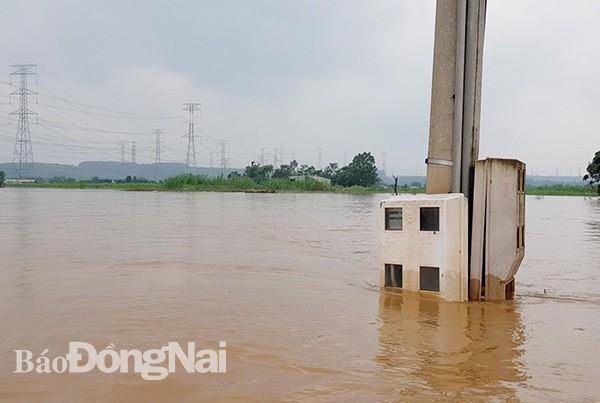 Đồng Nai mưa lớn ngập hàng trăm ngôi nhà, 1 người chết do lũ cuốn - Ảnh 5.