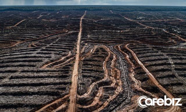 Cơn khát dầu cọ: Cội nguồn của việc cháy rừng hàng loạt tại Indonesia, khiến toàn Đông Nam Á ngập chìm trong ô nhiễm không khí - Ảnh 4.