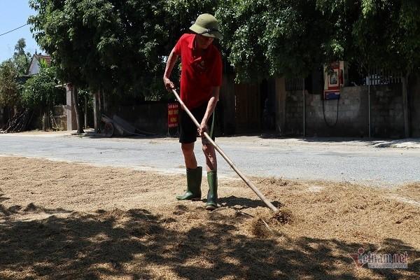 Thóc nảy mầm vứt cho trâu ăn, dân rơi nước mắt lo ngày mai - Ảnh 6.