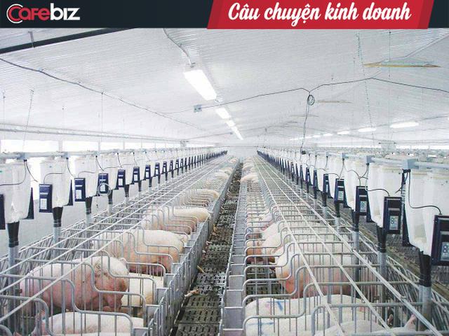 Vua cá Hùng Vương tiết lộ nguyên nhân ngập trong thua lỗ và nợ: Chi phí đầu tư một m2 cho heo ở còn cao hơn người ở, lên tới 20 triệu đồng /m2  - Ảnh 1.