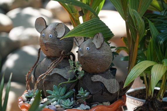 Độc đáo bonsai dừa hình chuột - Ảnh 2.