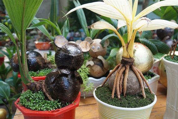 Độc đáo bonsai dừa hình chuột - Ảnh 5.