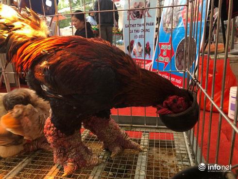 Kỳ lạ cặp chân gà Đông Tảo nở như súp lơ, được rao bán giá hơn 10 triệu đồng - Ảnh 1.
