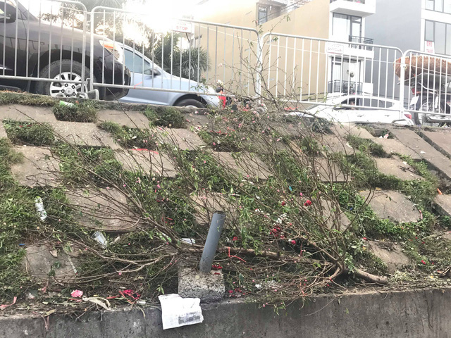 Chiều 30 Tết: Đào đại hạ giá 50.000 đồng/cành vẫn vắng bóng người mua, tiểu thương ngậm ngùi vứt lên xe rác - Ảnh 3.