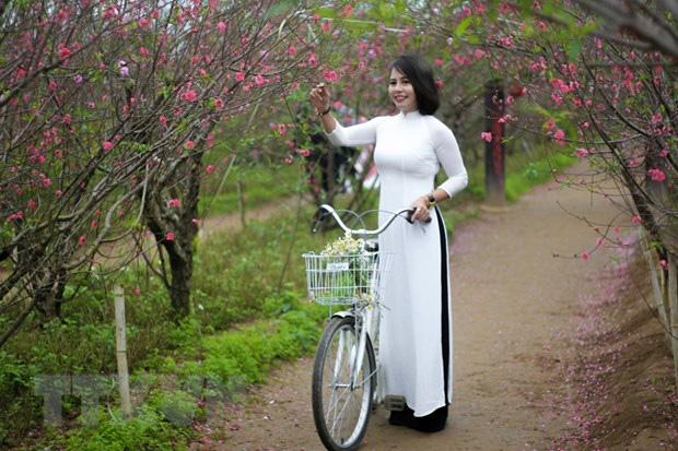 Những điều thú vị về hoa đào Nhật Tân của người Hà Nội - Ảnh 1.