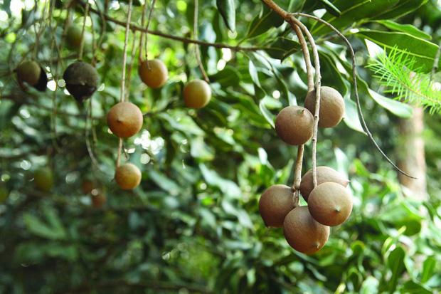Câu chuyện về loại hạt trong khay mứt Tết của nhiều gia đình: Đắt đỏ nhất thế giới, nhưng là có lý do của nó - Ảnh 3.