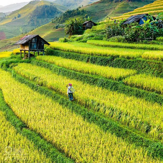 HOT: Ruộng bậc thang Mù Cang Chải vừa được công nhận Di tích Quốc gia đặc biệt, dự sẽ ngày càng hot trên bản đồ du lịch Việt - Ảnh 9.