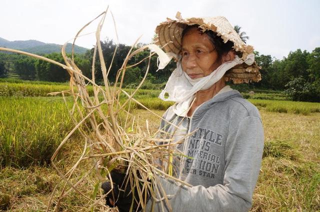 Chuyển đổi đất lúa sang đất trồng ngô mang hiệu quả kinh tế cao. Ảnh minh họa.
