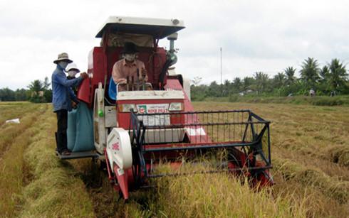 Cơ giới hóa trong thu hoạch lúa, hạ giá thành sản xuất.