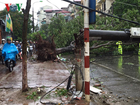 Cây đổ trên đường Võ Thị Sáu (ảnh Trường Giang)