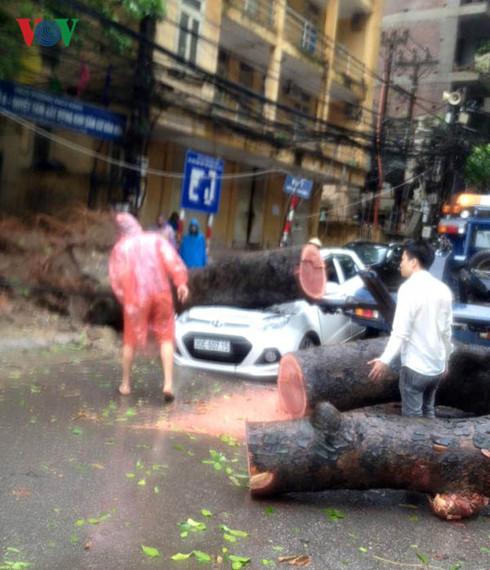Cây đè nát xe ô tô trên phố Trần Thánh Tông (ảnh Thanh Trường)