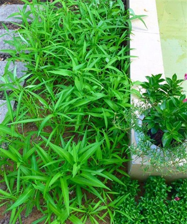 khu vuon xanh muot mat trong can biet thu 21 ty cua mc quyen linh Khám phá khu vườn xanh mướt mắt trong căn biệt thự 21 tỷ của MC Quyền Linh