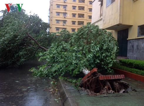 Cây đổ ngổn ngang trong khu đô thị Đồng Tàu (phường Thịnh Liệt, quận Hoàng Mai, Hà Nội). Ảnh: Công Hân