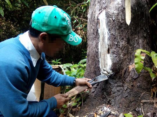 Người dân huyện Tu Mơ Rông, tỉnh Kon Tum nuôi ong trong rừng Ảnh: HOÀNG THANH