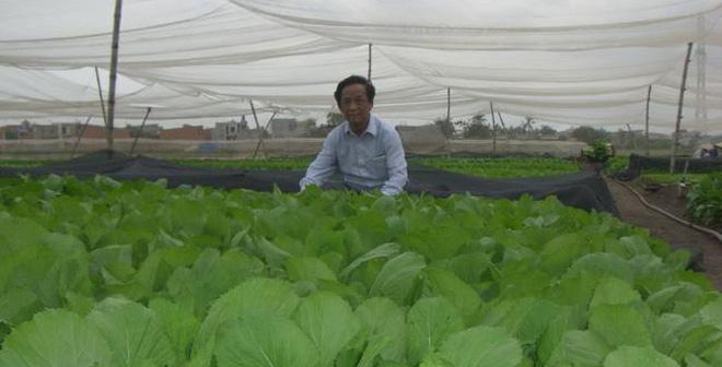 Giáo sư Nguyễn Lân Dũng ngồi bên vườn rau sạch. Ảnh từ trang cá nhân của ông.