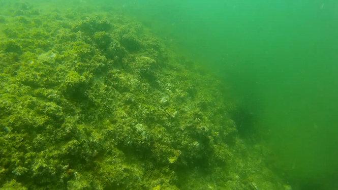 Cận cảnh dưới đáy biển ở bãi Bến Cá huyện Nhân Trạch, Quảng Bình tháng 7-2016