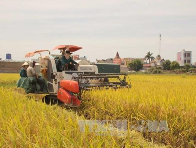 Nông dân thu hoạch lúa ở Thái Bình. (Ảnh: Xuân Tiến/TTXVN)
