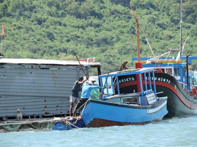 Người dân vớt cá chết