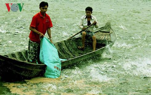 'Chi phí thức ăn cho cá tra đội chi phí nuôi rất cao'